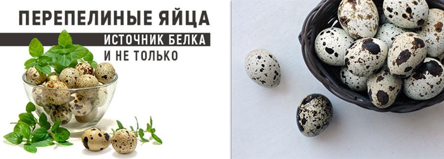 Перепелиные яйца как источник белка и не только